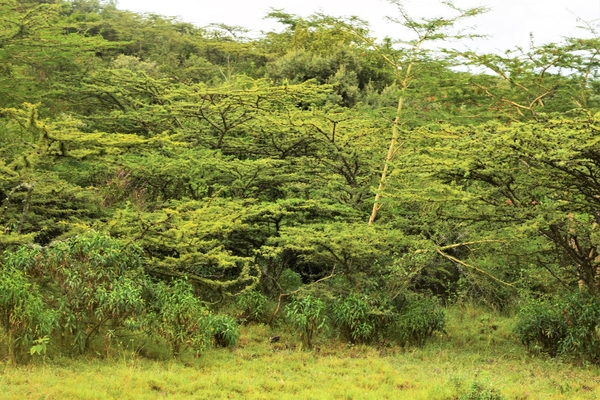 Hiking near Nairobi