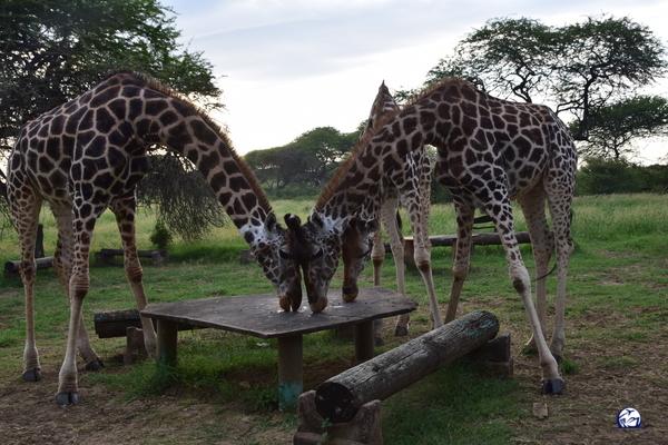 nguuni nature sanctuary